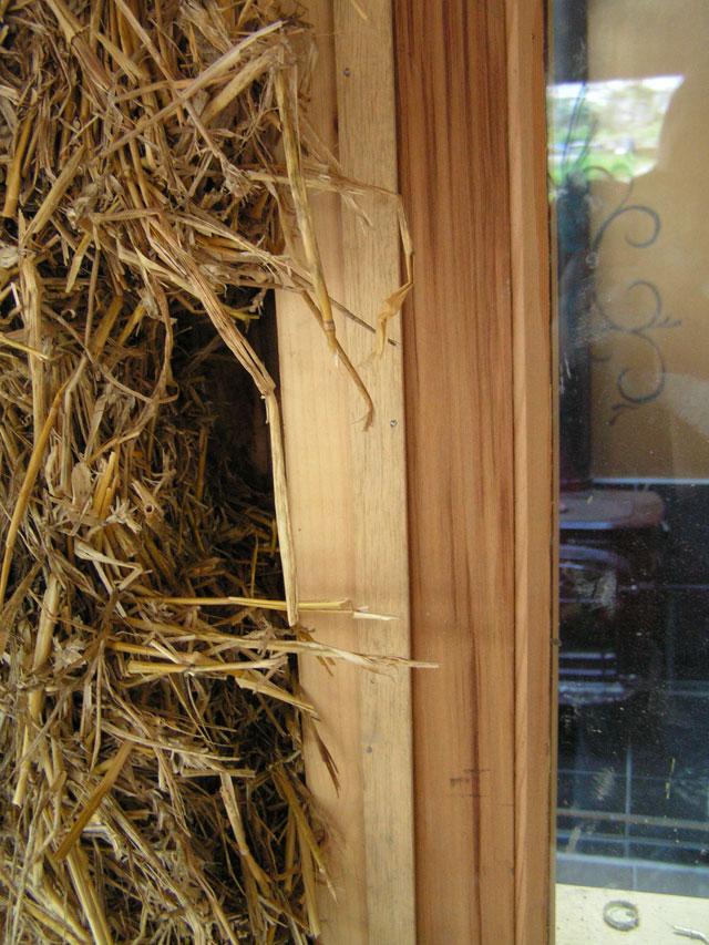 ex bird's nest