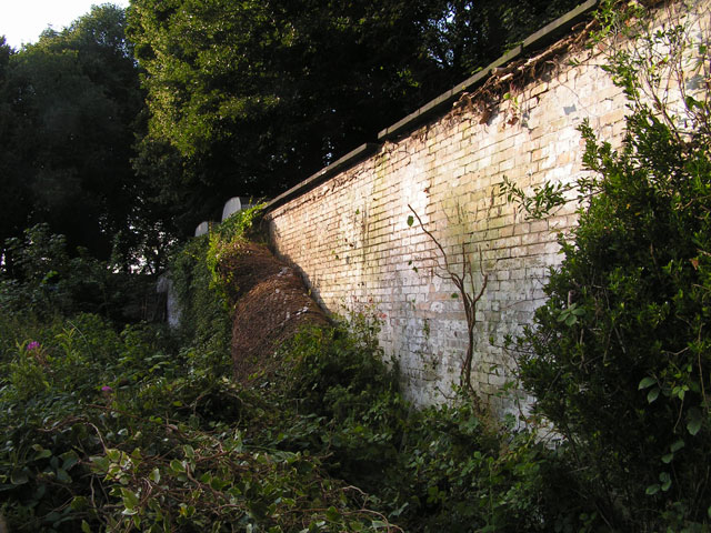 the back wall, ivy free
