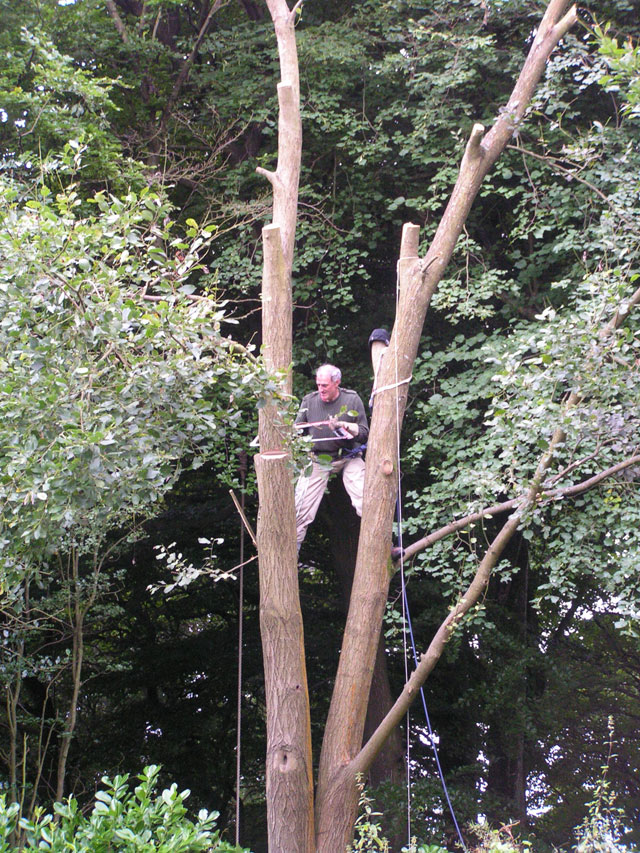 Simon up a tree