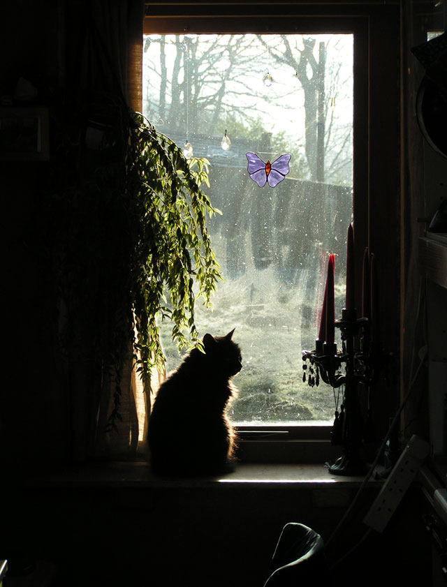 Lily in the window