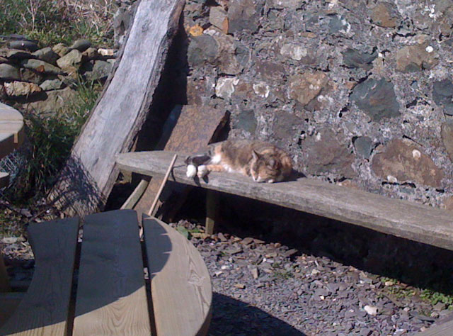 Puss in the sun