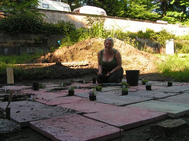 planting alpines between the paving slabs