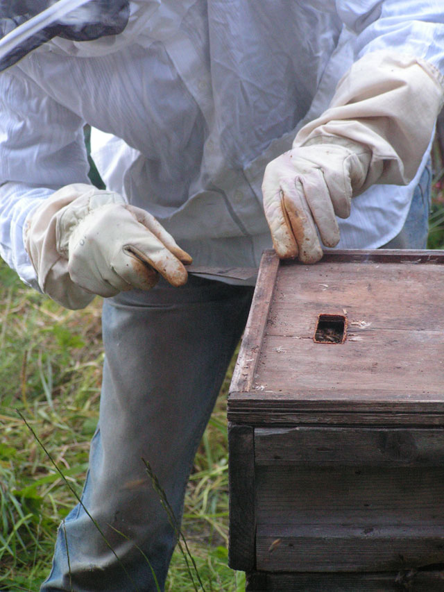 Opening up the hive