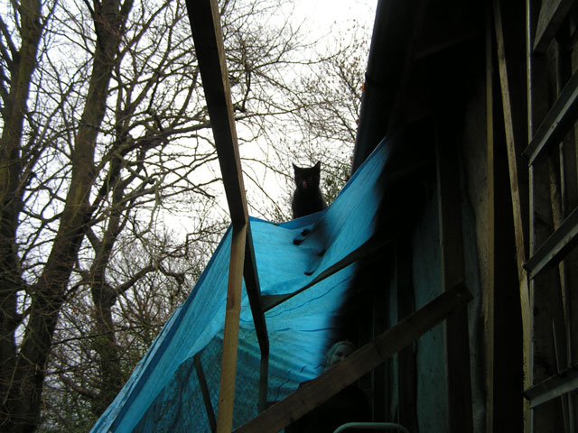 cat on tarp