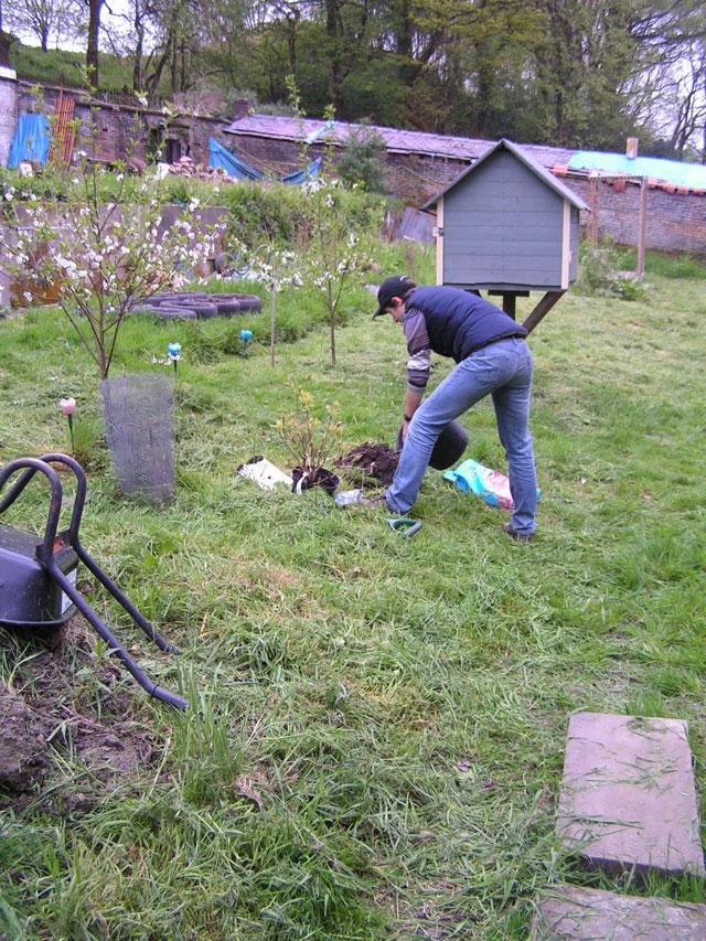 Anna planting her new orange azalea