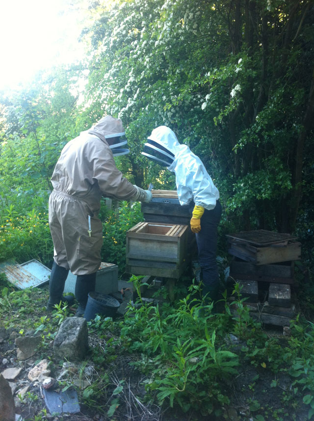 Anna and the bee man installing the bees