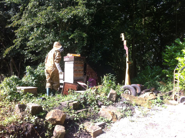 Bees being evicted